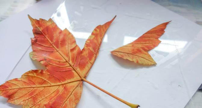 DIY Herbstblätter