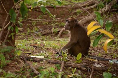 monkey under a tree