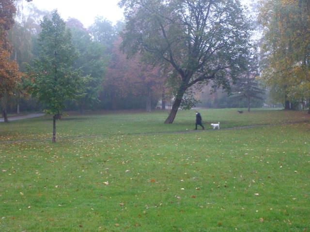 Frauchen im schwarzen Mantel und weißer Hund gehen über eine grüne Wiese, die an den Rändern von frühhersbstlich gefärbten Bäumen gesäumt ist. Leichter Nebel hängt im bunten Blattwerk.