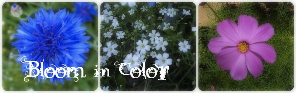 Bloom In Color
