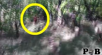 Real Bigfoot Sightings 2014