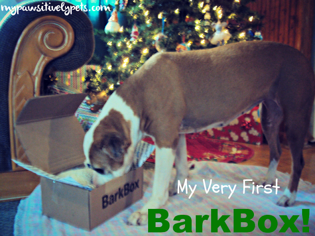 Review of our first BarkBox