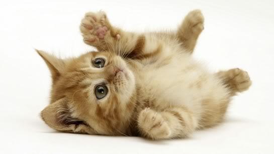 Gambar Kucing Lucu 1