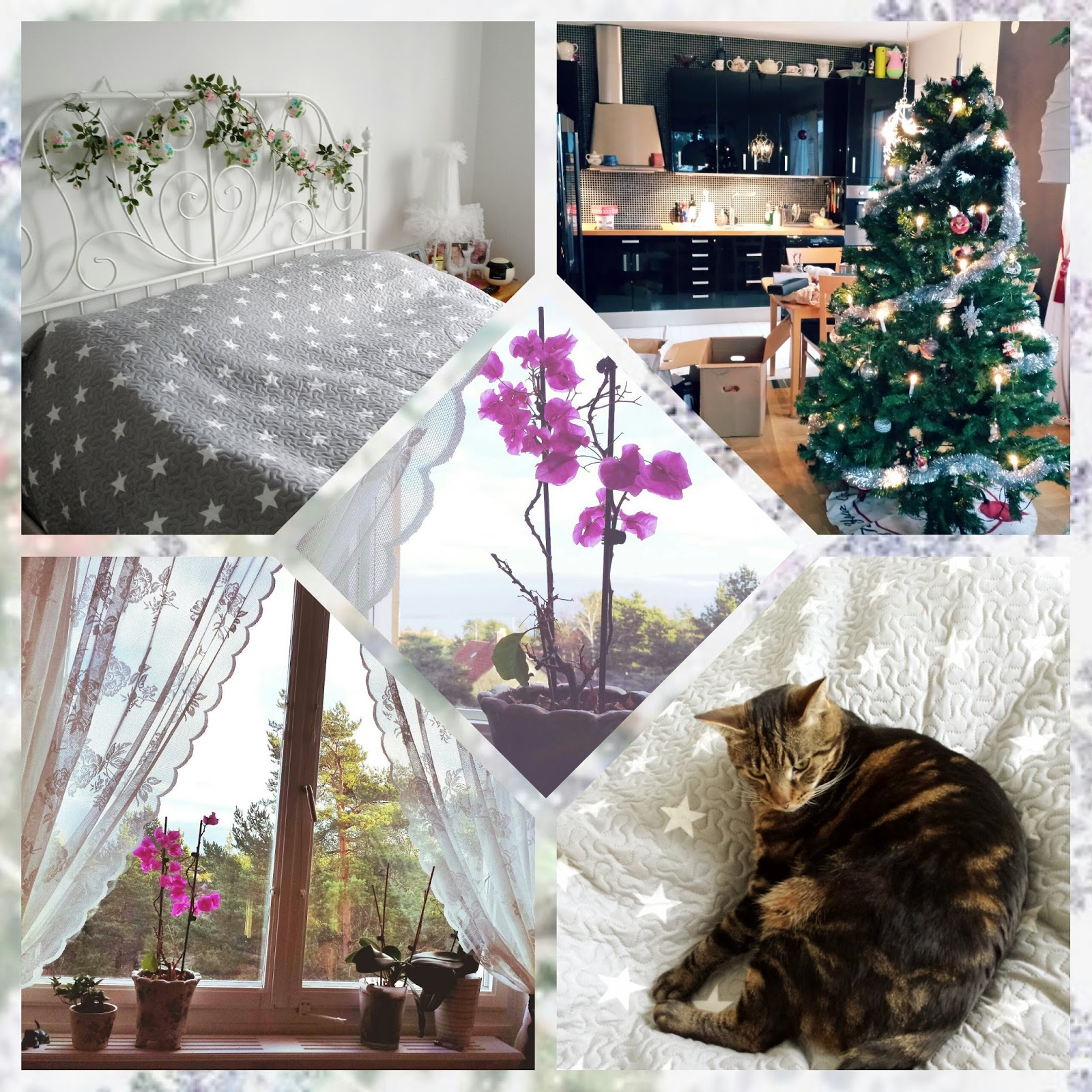 home, decor, lace curtains, cat, kitchen, christmas tree, new england