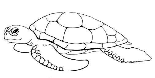 Animales para colorear: Tortugas marinas