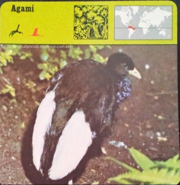 Blog Safari Club, el Agamí, también se le llama Trompetero