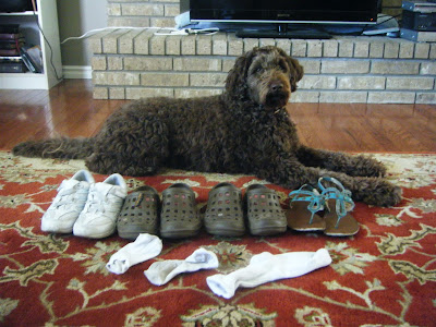 Alfie lying stretched out on the rug in front of the TV in front of his collection:  4 pair of shoes, and 3 socks
