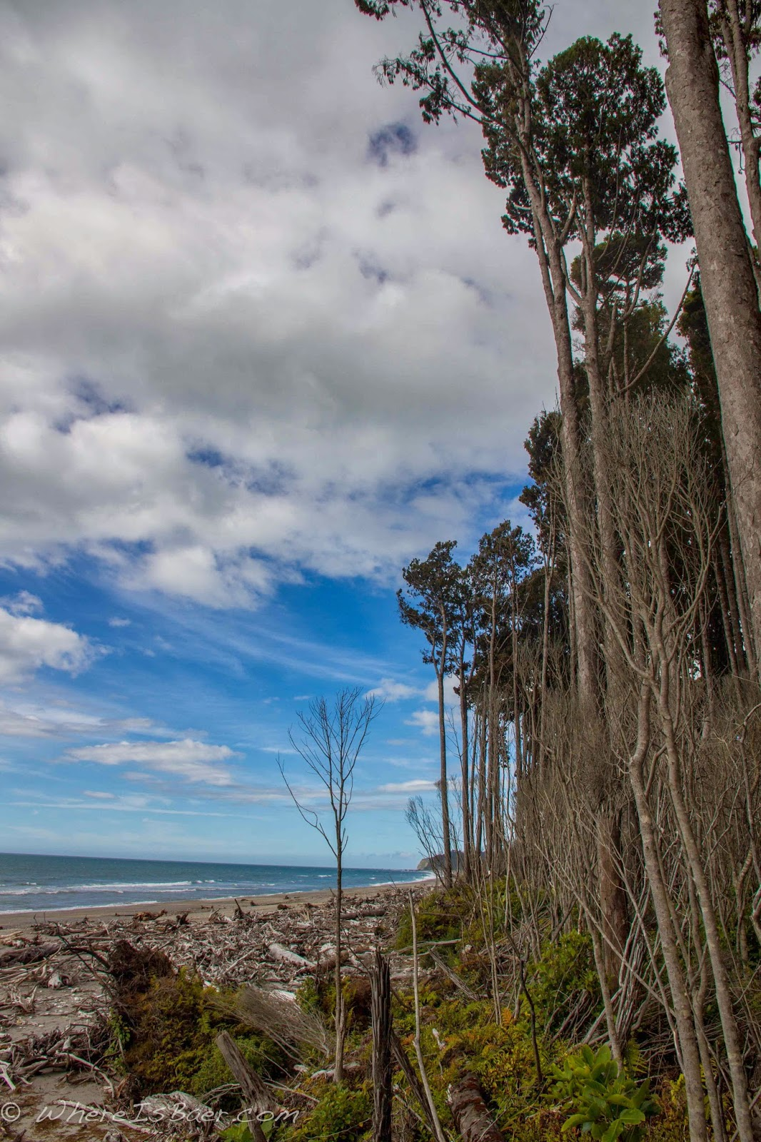 the densely forested New Zealand coast line looking out onto the Tasman Sea, Chris Baer