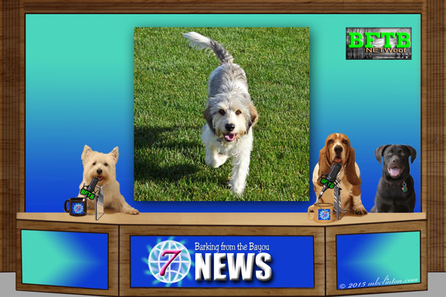 BFTB NETWoof Dog Sports desk with dogs