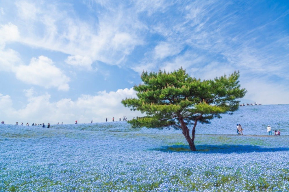 The 100 best photographs ever taken without photoshop - A blue universe in Japan