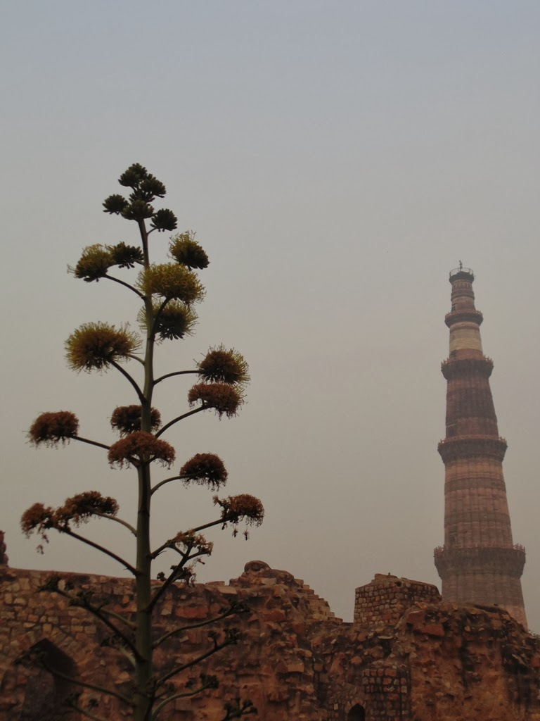 Qutub Minar seen in background of a plant at Qutub Complex