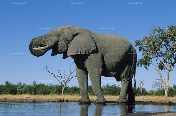 79 curiosidades del reino animal que tal vez no conoc as taringa - Como se aparean los elefantes ...