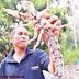 PELIK! - Thalassina anomala, Haiwan Pelik Seperti Ketam Seperti Udang Berekor Kala Jengking (4 GAMBAR)