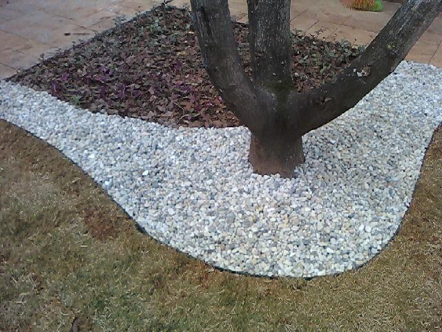 seixo para jardim em belem: de pínus e com uma borda bem larga em torno de da árvore com seixo