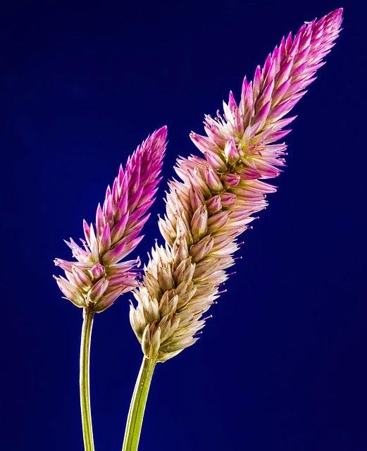 פרחים הוד השרון