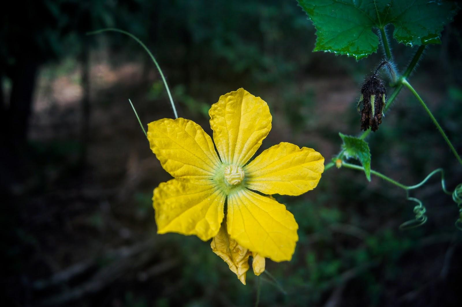 flor de la isla de komodo