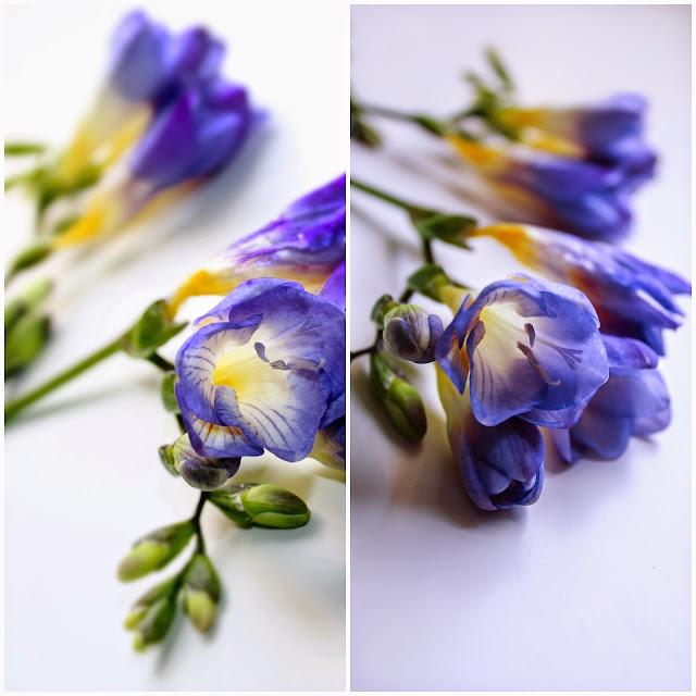 beautiful spring freesias