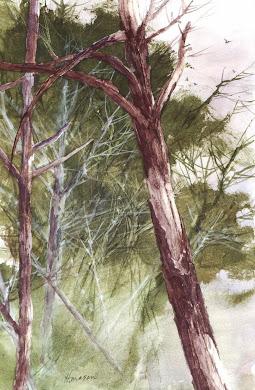 Bog Trees: Lincoln City