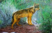 PINTURAS DE ANIMALES SALVAJES Lobo Pintado al Óleo Sobre Lienzo