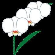 flower_ran.png