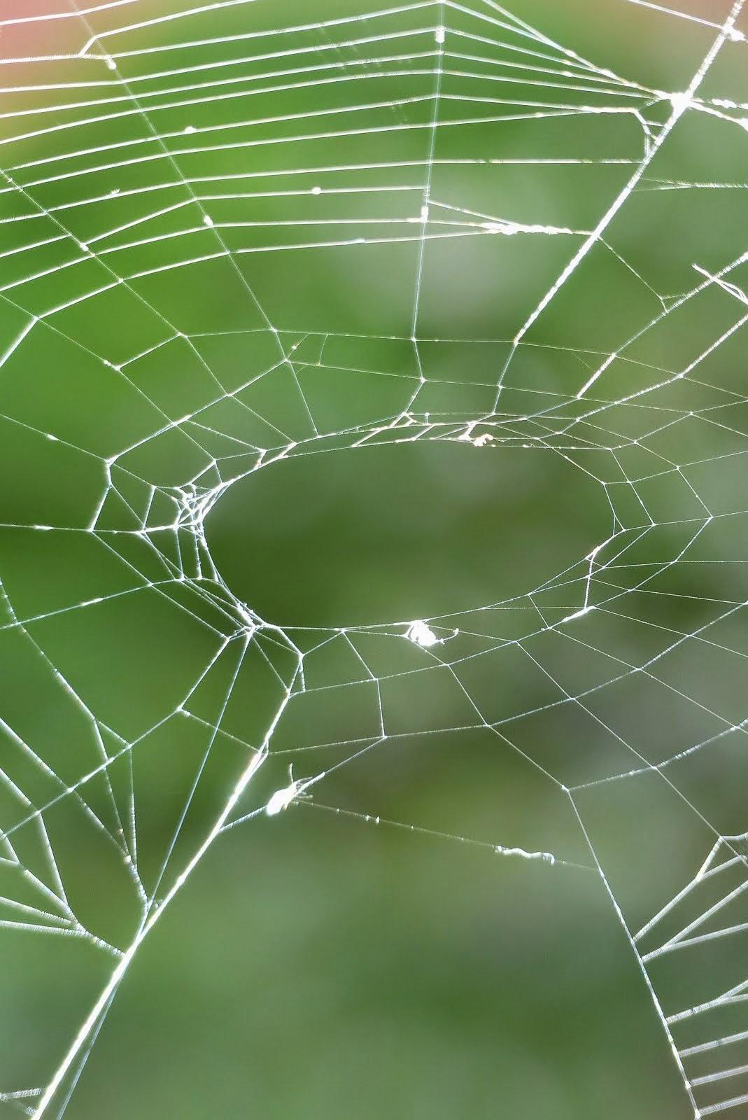 Orb spider web on my washing line