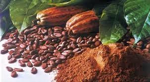 7 Manfaat Buah Coklat buat tubuh