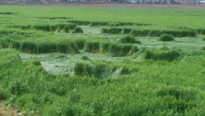 Crop Circle Appears In Mexico Scares Locals, UFO Sightings
