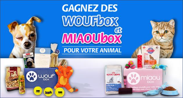 15 coffrets Woufbox +  15 coffrets Miaoubox