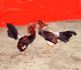 Imagenes de gallos