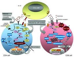 acute myeloid leukemia treatment