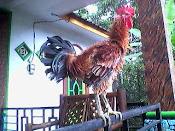 Artikel Ayam Ketawa