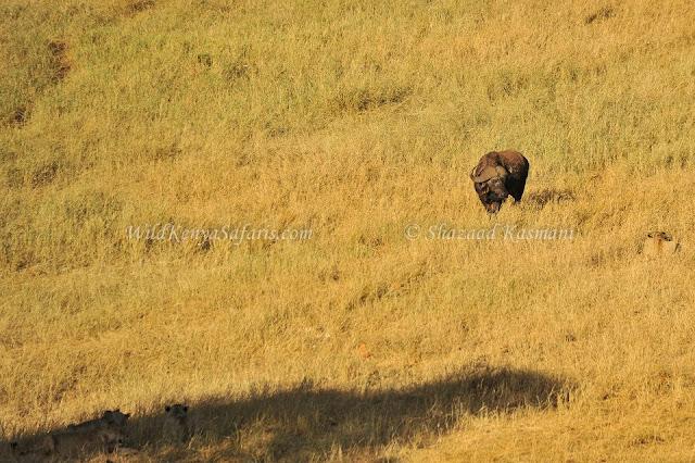 wildlife diaries, wildlife kenya