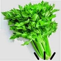 khasiat daun seledri untuk kesehatan tubuh