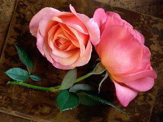 Pink Roses Love Wallpaper
