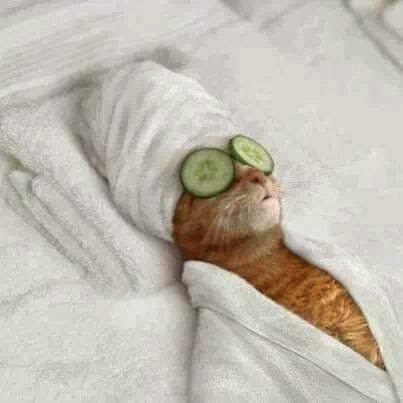 MISS CAT, UNA DE LAS AMANTES DE MILORD CAT