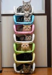 Quantos gatinhos!