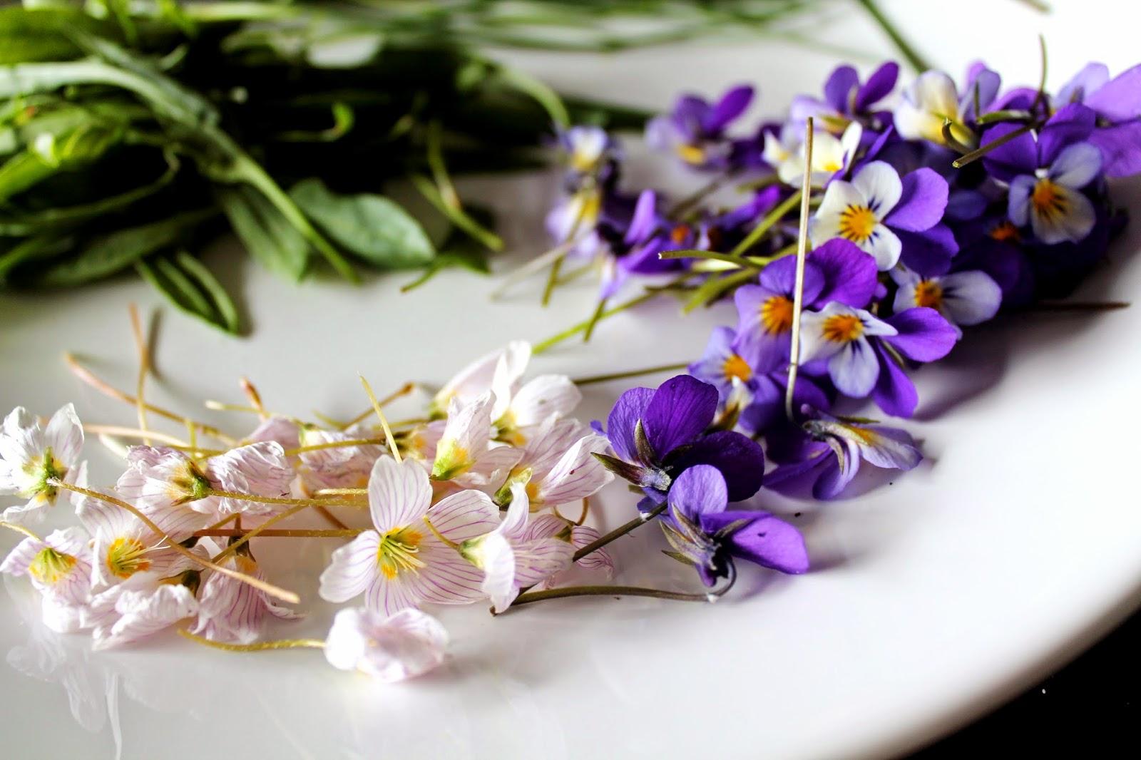 Violets and wood sorrel flower | Alinan kotona blog