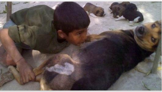 Akibat Kemiskinan Terlampau, Budak Minum Susu Anjing Di Bangladesh