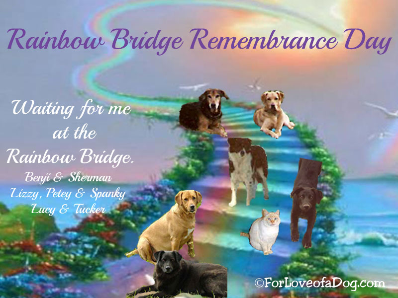 Remembrance Day Dogs