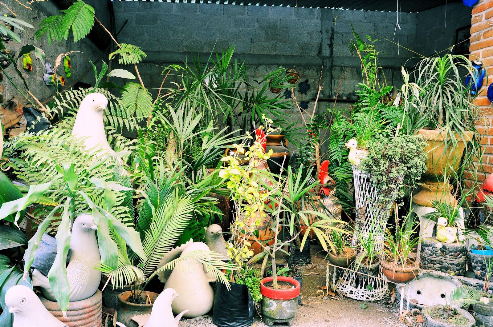 Directorio tlapacoyan vivero y venta de plantas a orillas for Todo para viveros