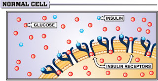 Normal cells respond properly to the normal level of insulin