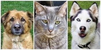 My 3 Amigos!
