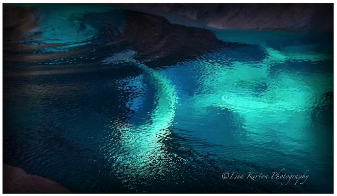"""""""Monet's"""" Belugas"""