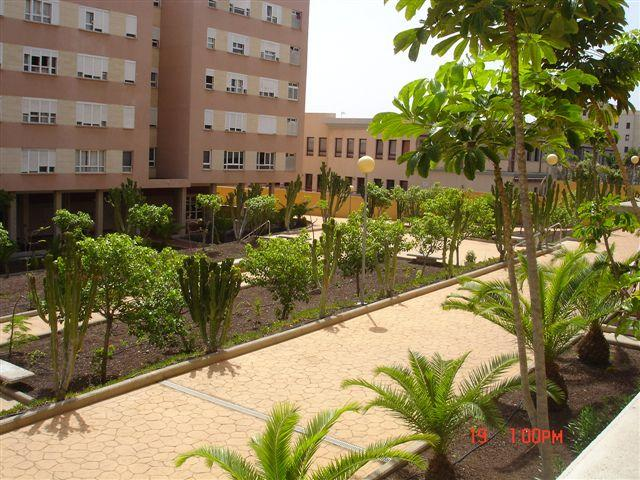 jardineria las palmas diseo de jardines en miami with