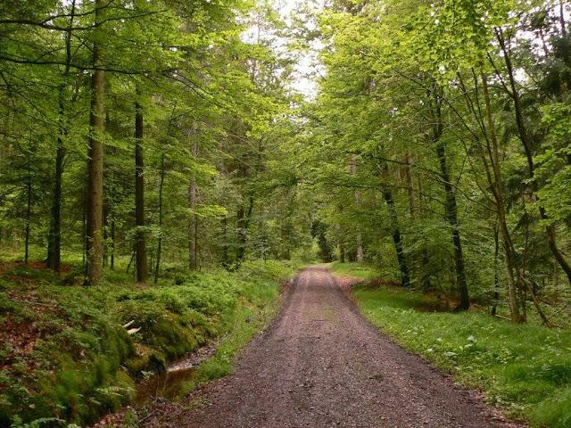Urlaub Sommer Passau Bayern Familie Dorf Spaziergang Wald