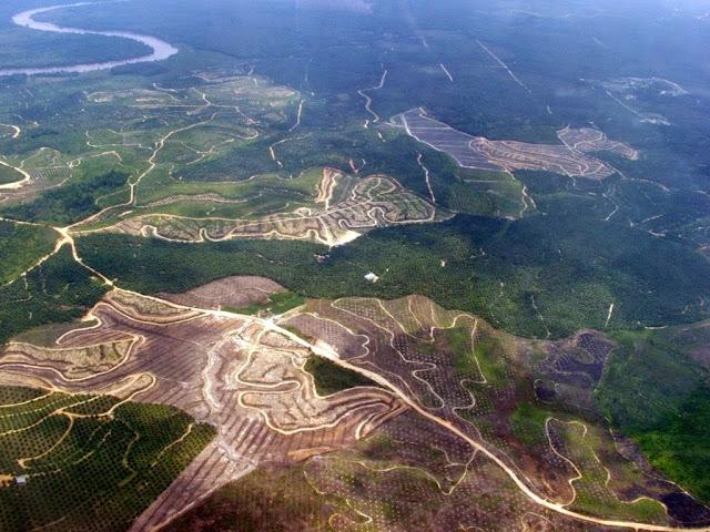 Menteri LHK Luncurkan Indeks Tata Kelola Hutan