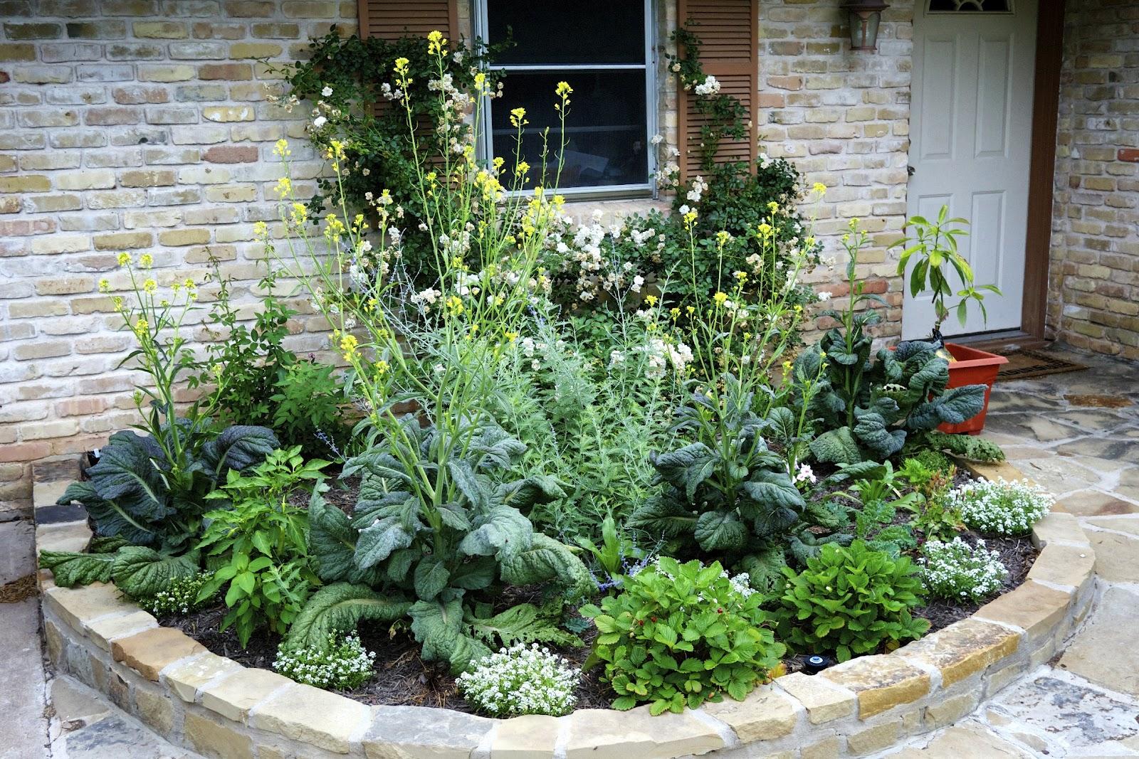 Backyard Edible Garden Ideas : Displaying 15> Images For  Front Yard Edible Garden Ideas