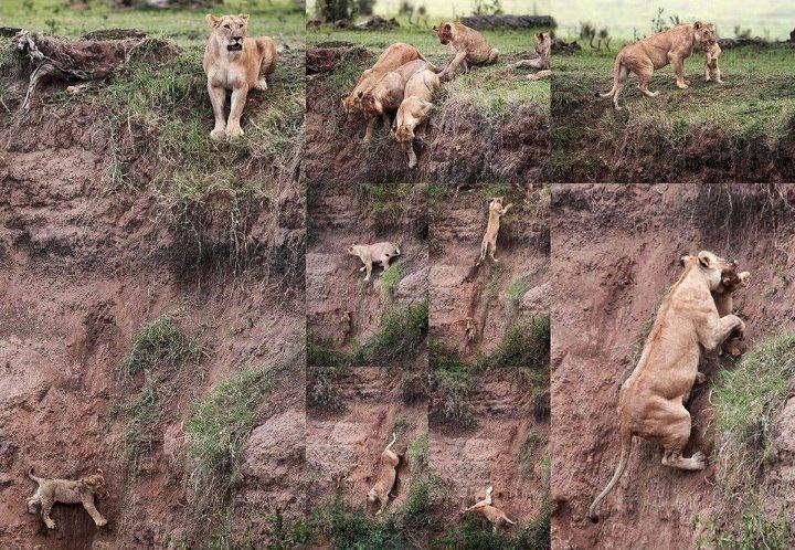 Pergorbanan ibu