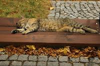 Odpolední siesta/The Afternoon Siesta