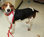 10/17/11 Matilda URGENT in Cottageville WV See Her VIDEO